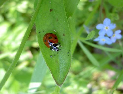 22 mei: wereldwijd biodiversiteitsdag