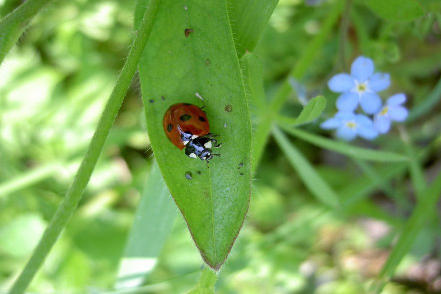 biodiversiteitsdag.