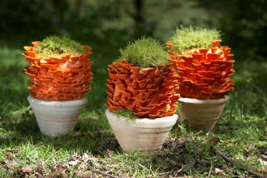 Haal de mystiek van de paddenstoelen in de tuin