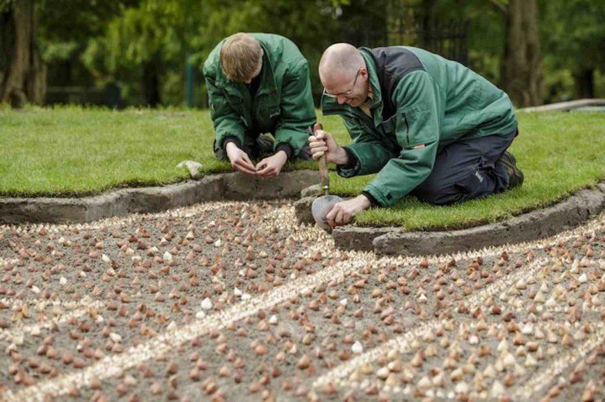 Keukenhof plant 7 miljoen bloembollen
