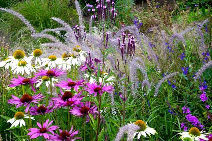 Het effect van kleuren in de tuin