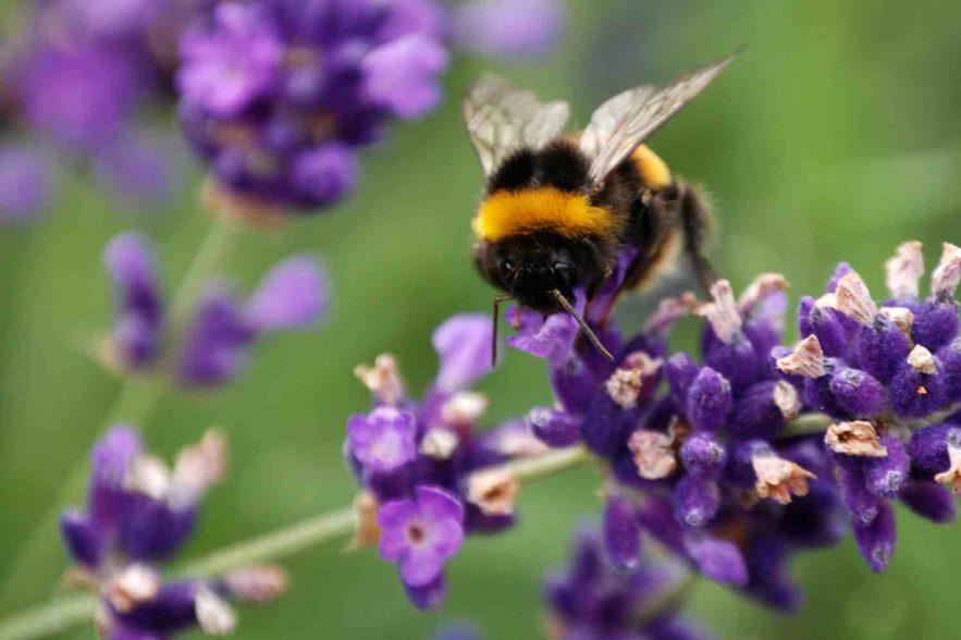 Bijenmakelaar Arie Koster