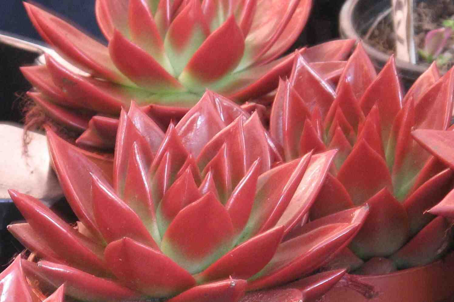 Zomerse kleuren in winterse huiskamer groenvandaag for Kleuren huiskamer