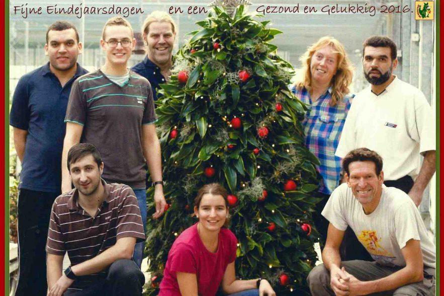 Kerst Dracaena kerstboom