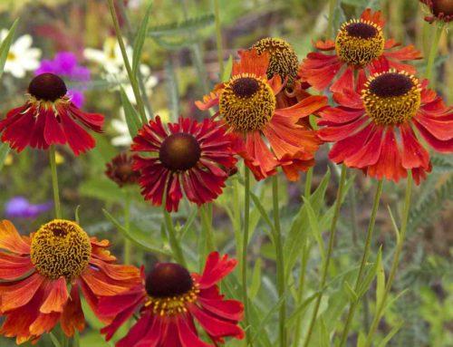 10 planten die het goed doen op kleigrond