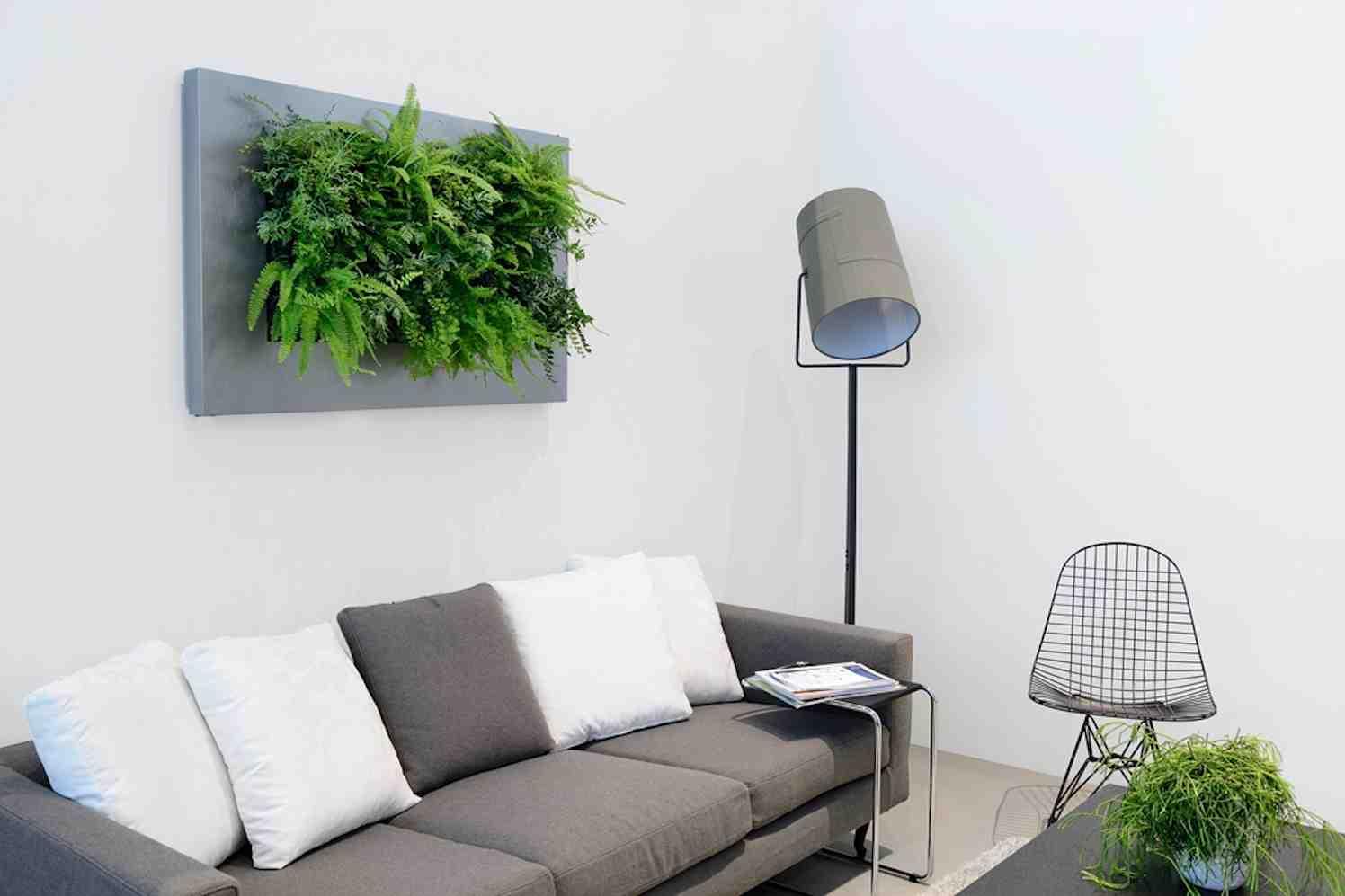 groene plant en wand