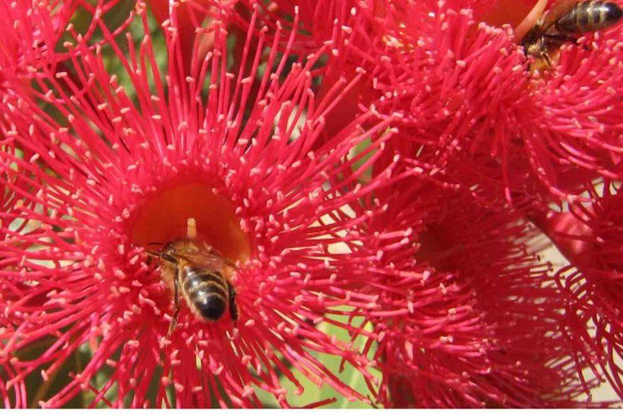 greenpeace tegen bijensterfte