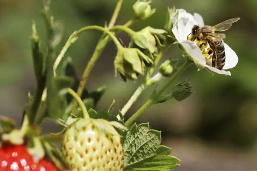 bijenradar van naturalis bij