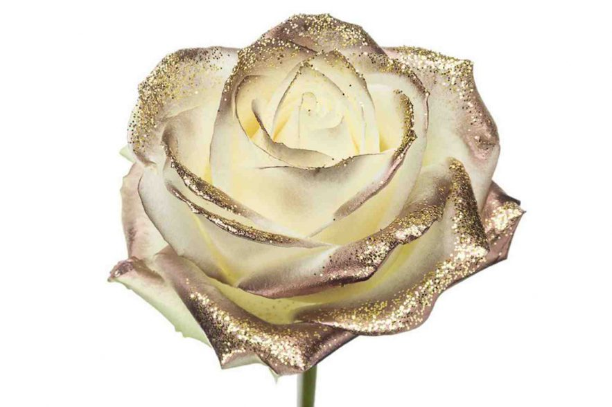 rozen, gtst