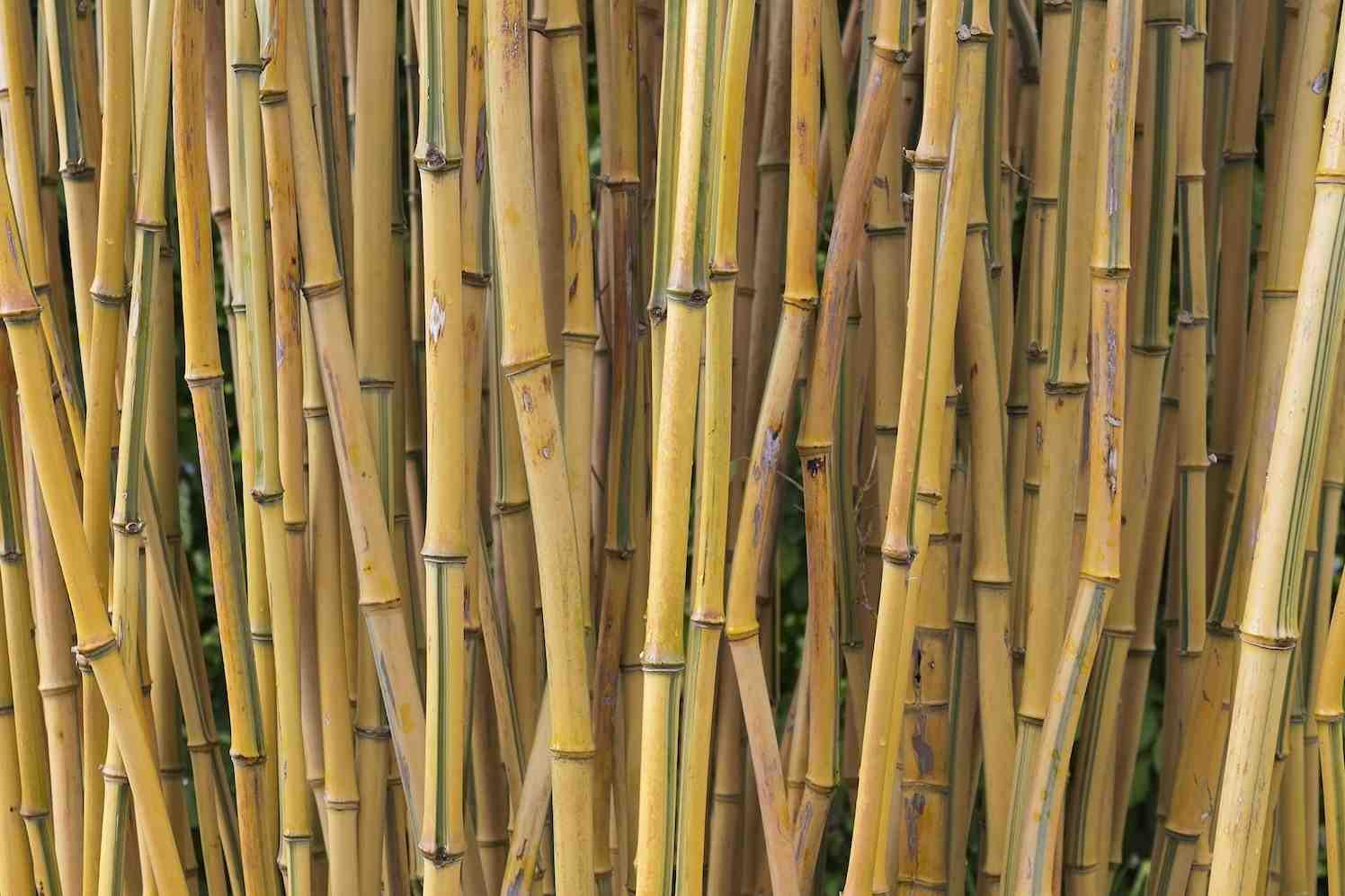 bamboe luier