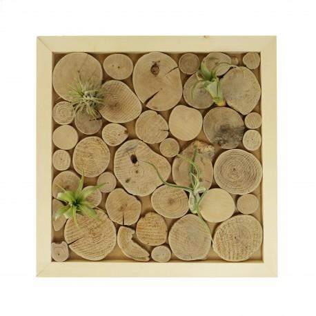 houtspul, luchtplantjes