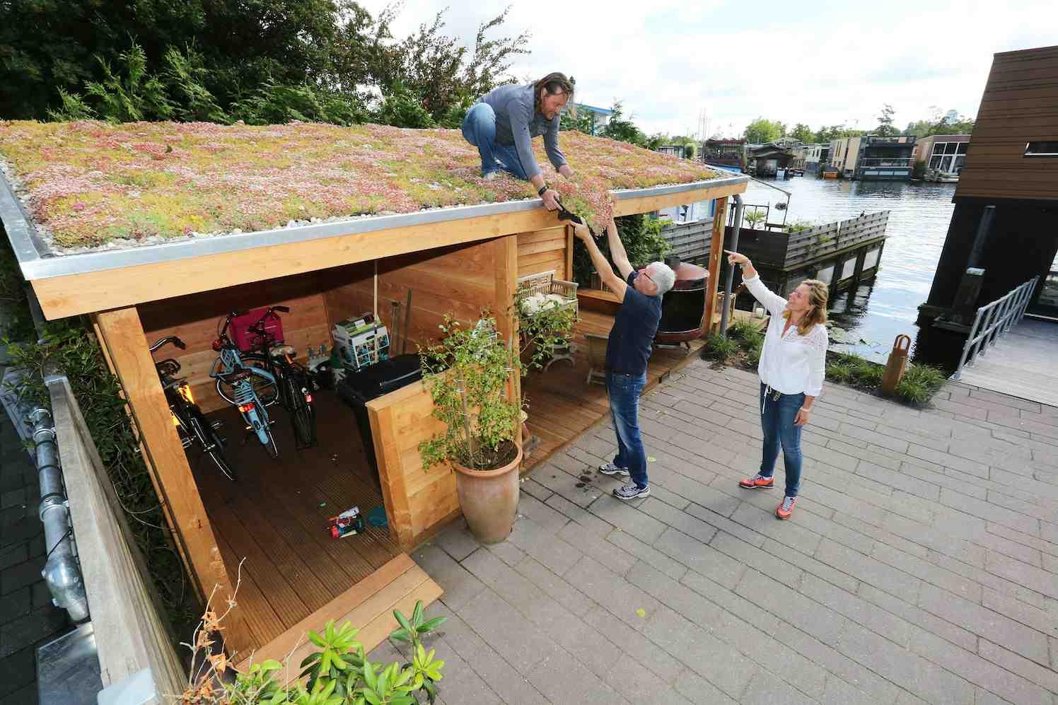 ecodak, groene daken