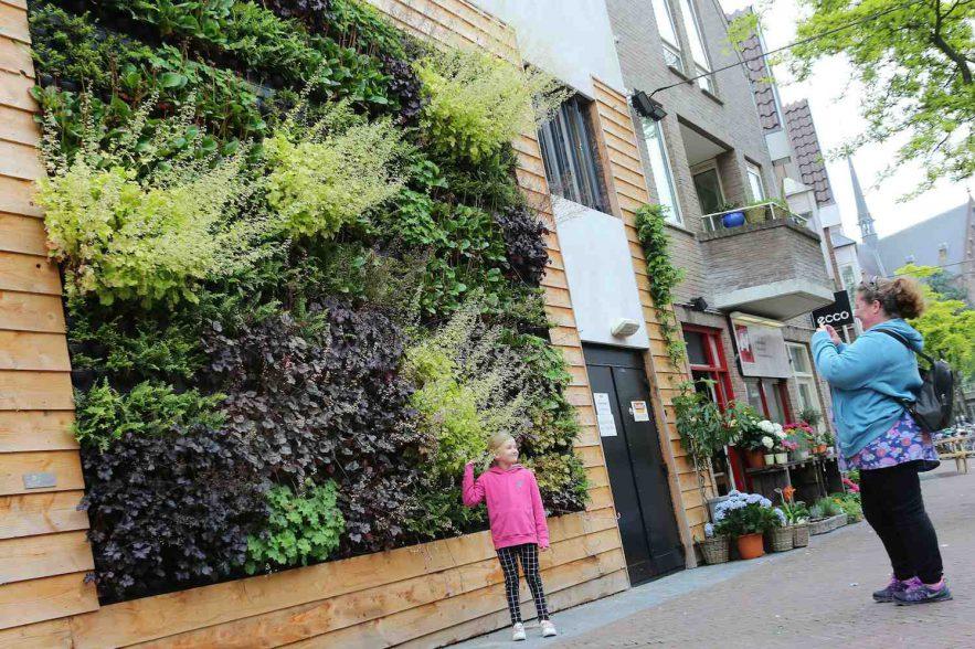groene muur, plantenwand