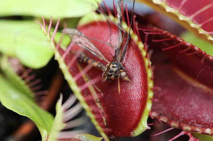 moerastuintjes zijn muggeneters