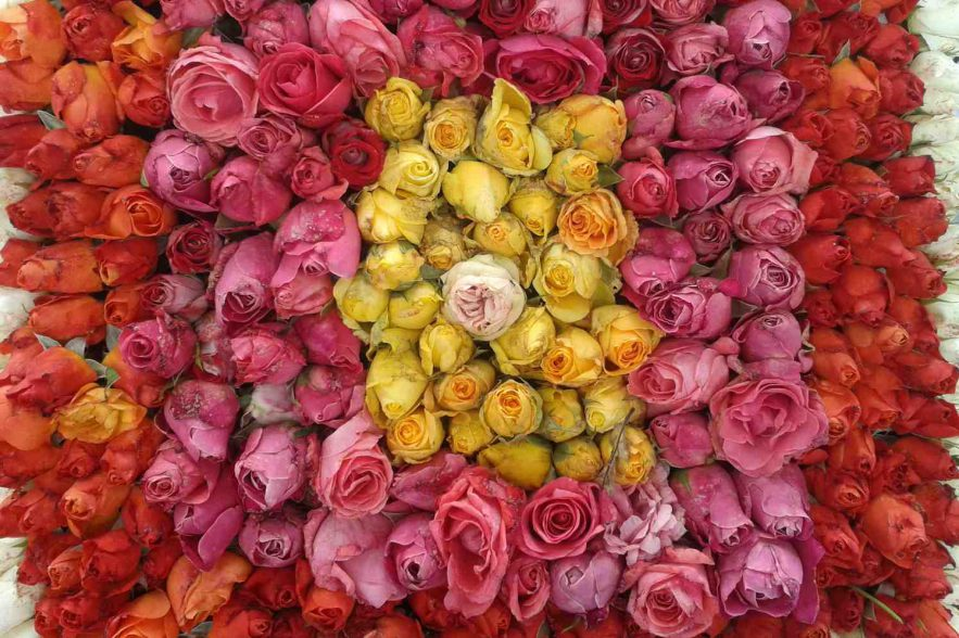rozenfestival in Lottum
