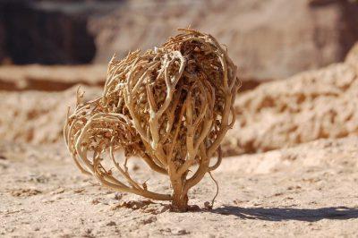 roos van jericho, Robs Grote Tuinverbouwing