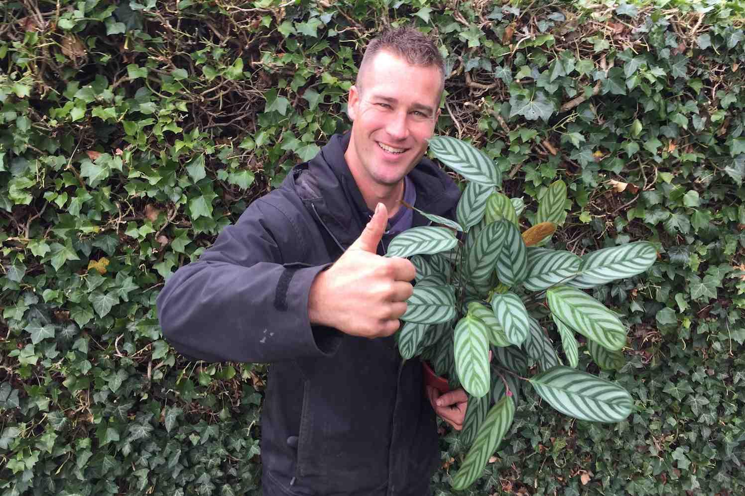 calathea, ivo putman plantplezier