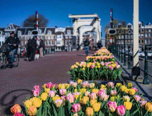 Tulp Festival 2020 is saluut aan alle Amsterdammers