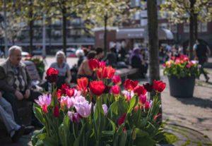 tulp-festival-2020-amsterdam