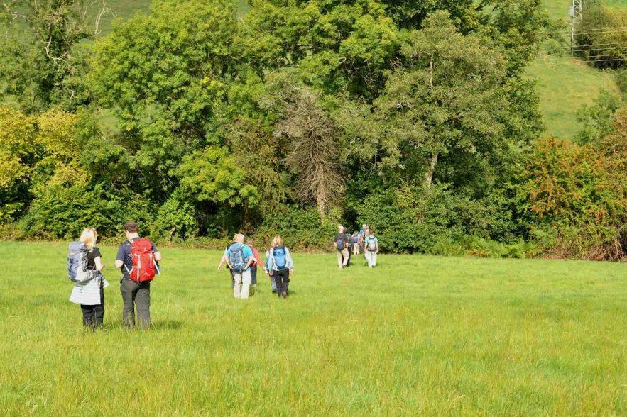 beter in het groen, wandelen, natuur