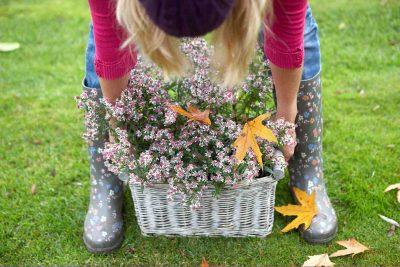 herfst vaste planten