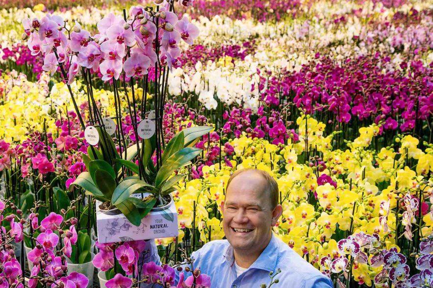 Natuurlijke orchideeën