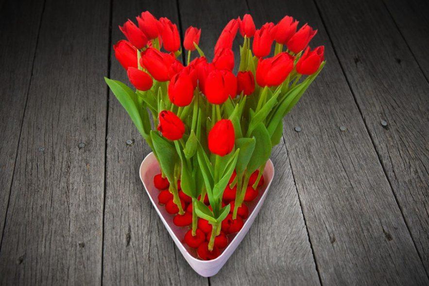 bloembollen tulpenbollen