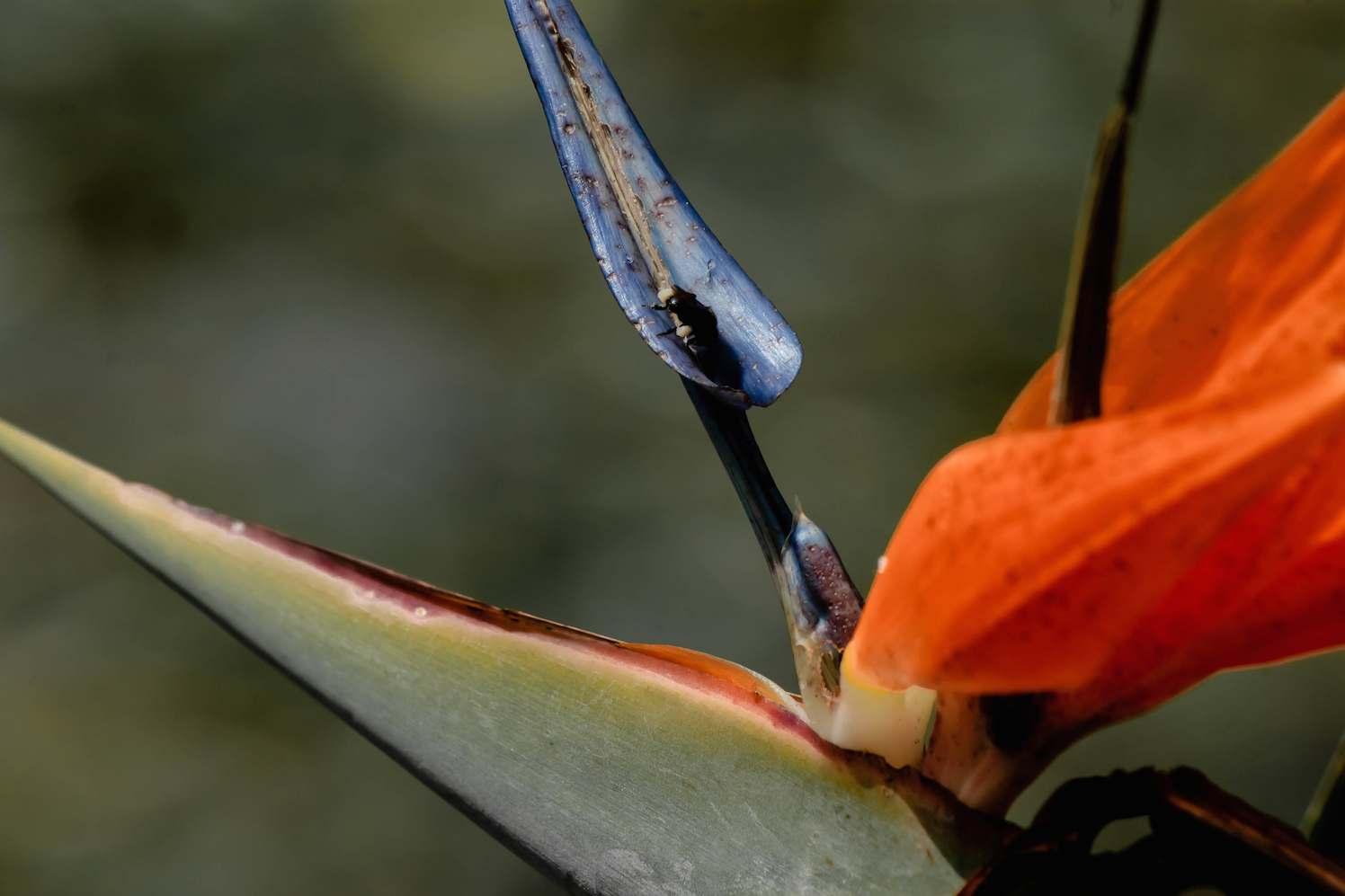 tuinen