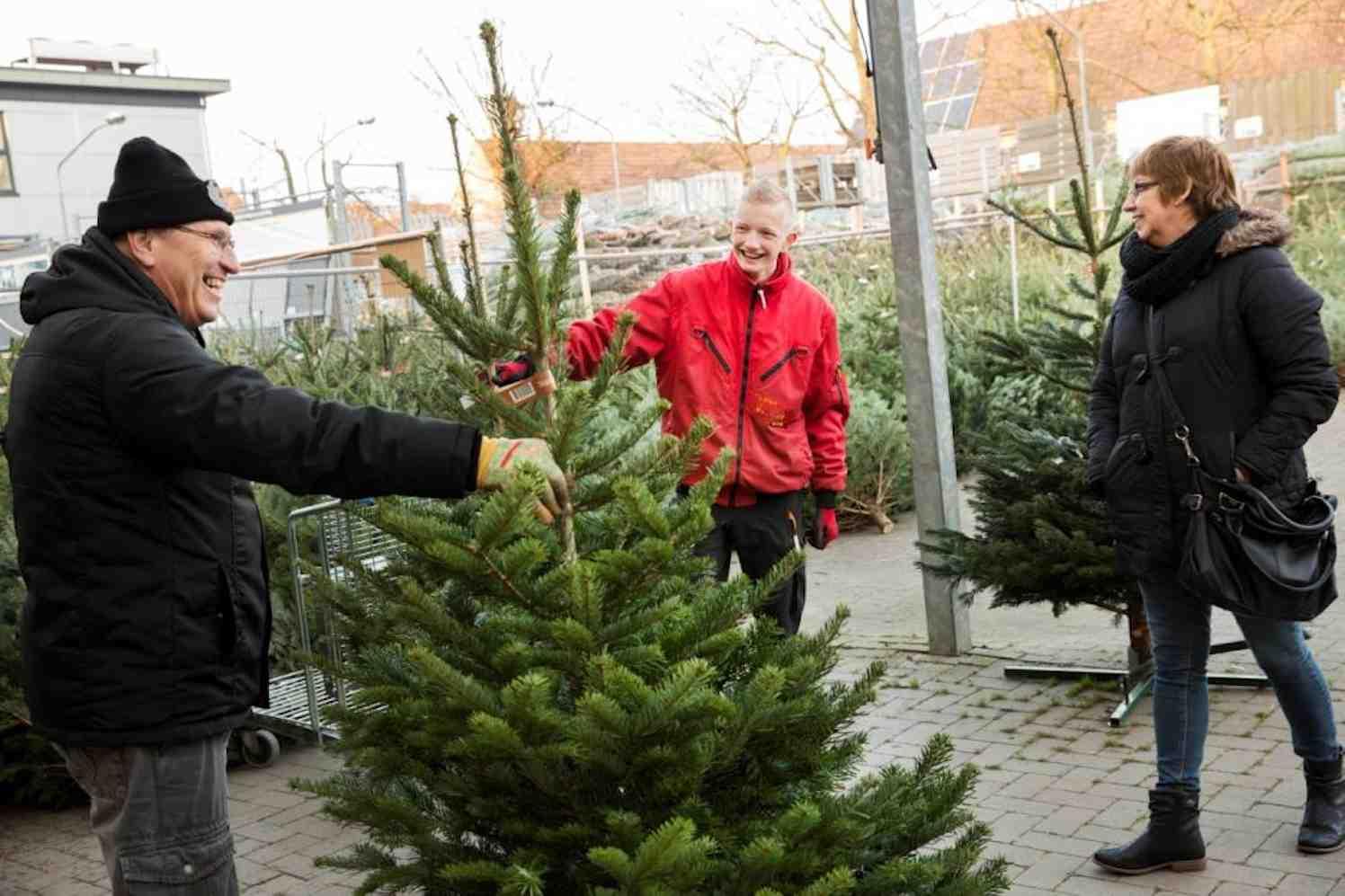 nordmann kerstbomen bij Praxis