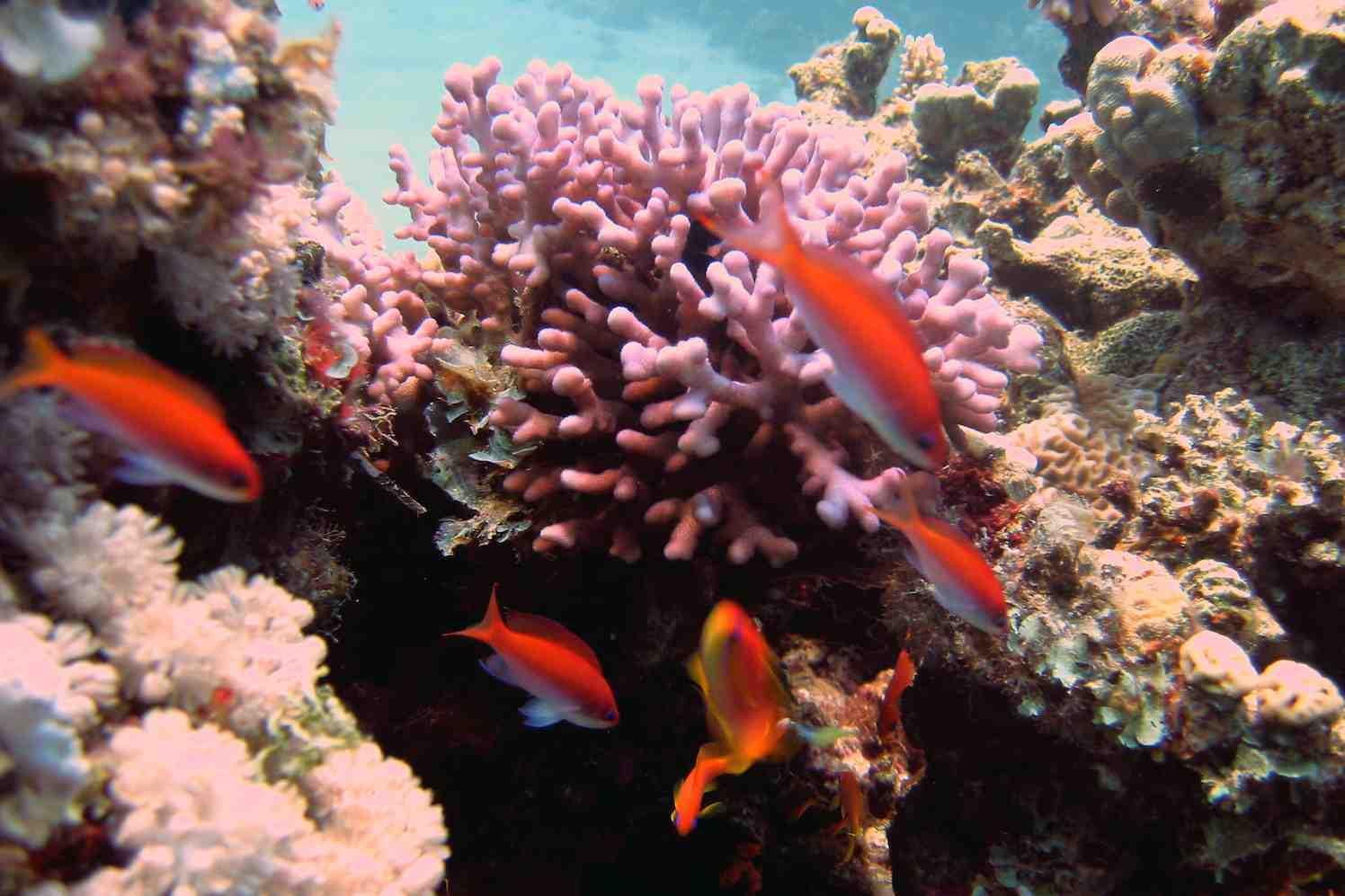 symposium over koraal