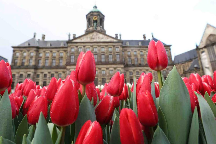 nationale tulpendag 2017