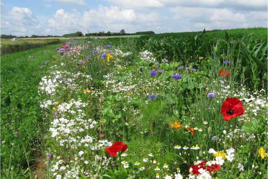 biologischer atuurinclusieve landbouw