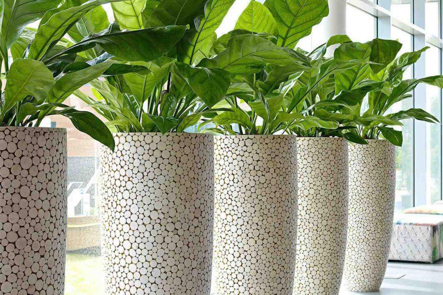 kamerplanten en kantoorgroen
