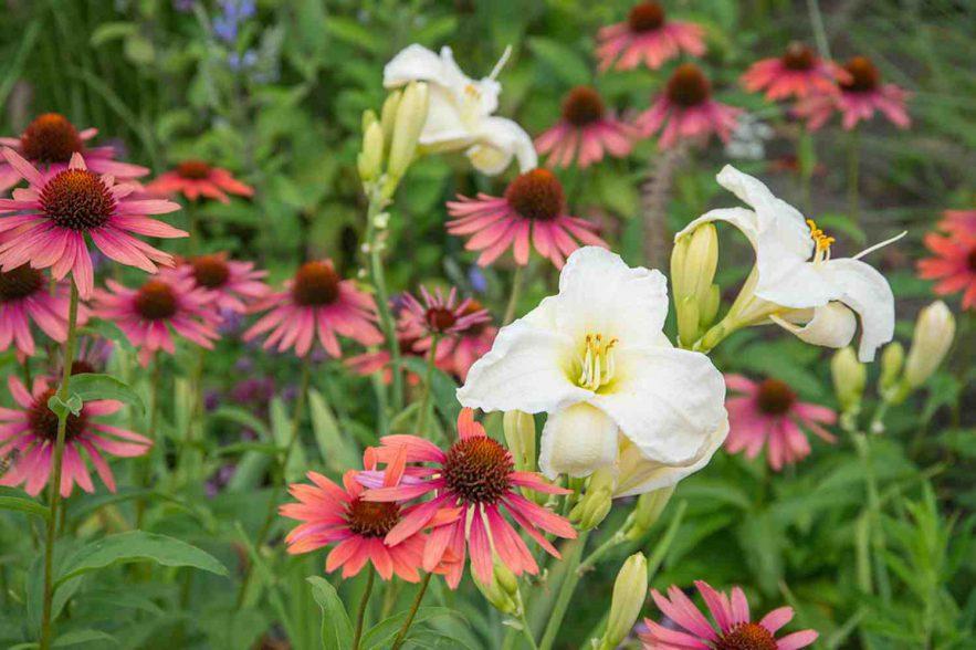 vaste planten zonaanbidders