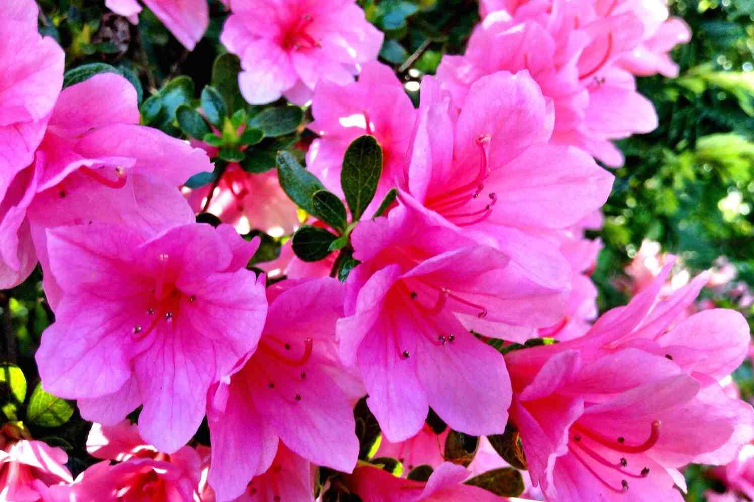 Bloemen met Flovium-Plus