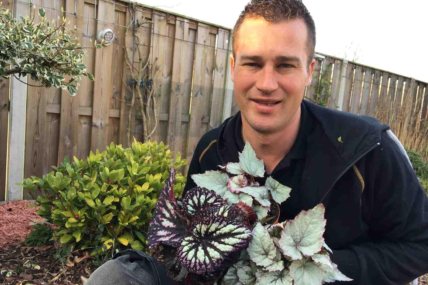 bladbegonia begonia