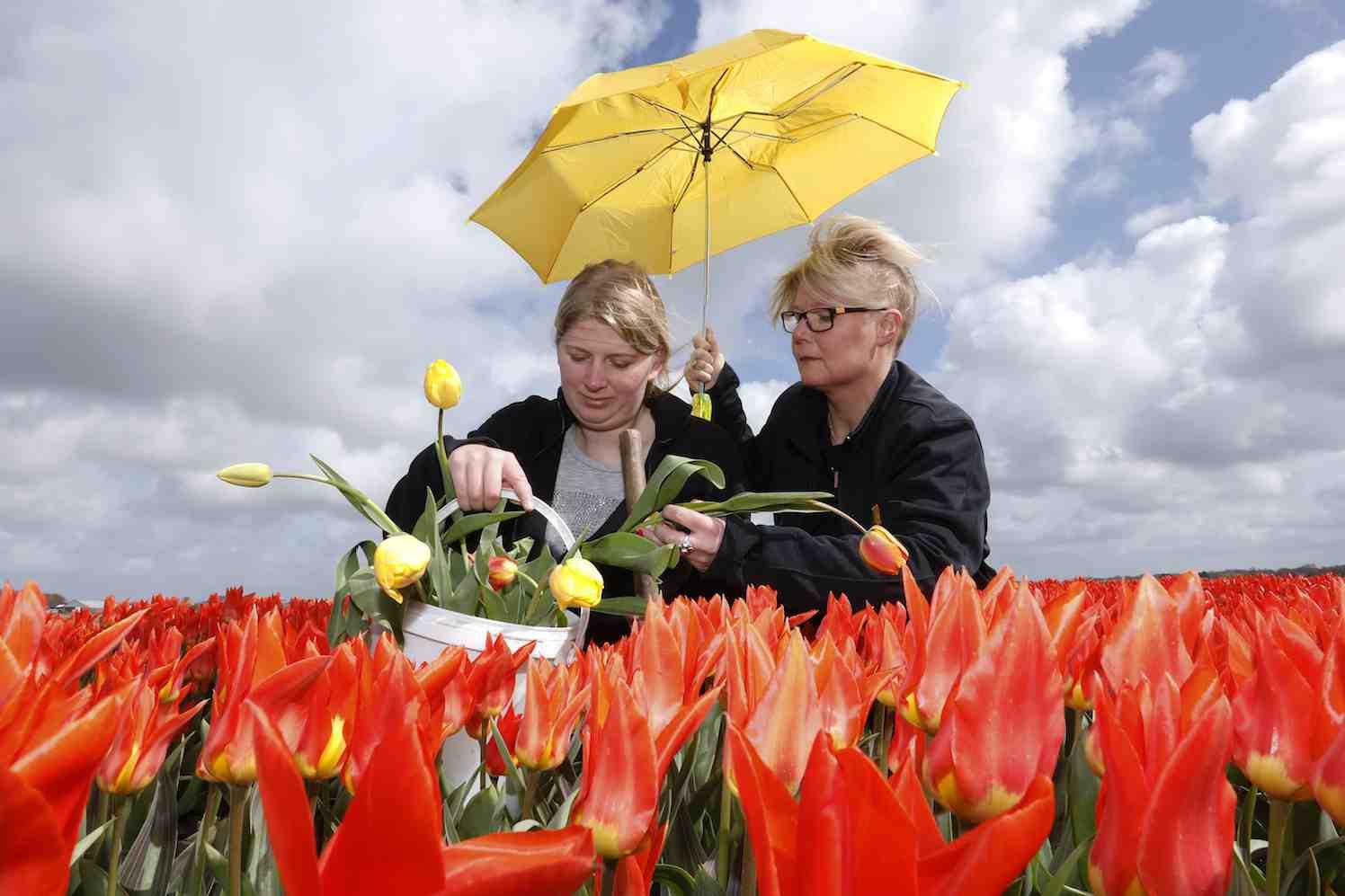 zieken tulpen zoeken ziekzoeken