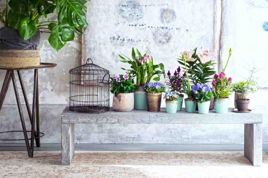 binnenstebuiten-planten
