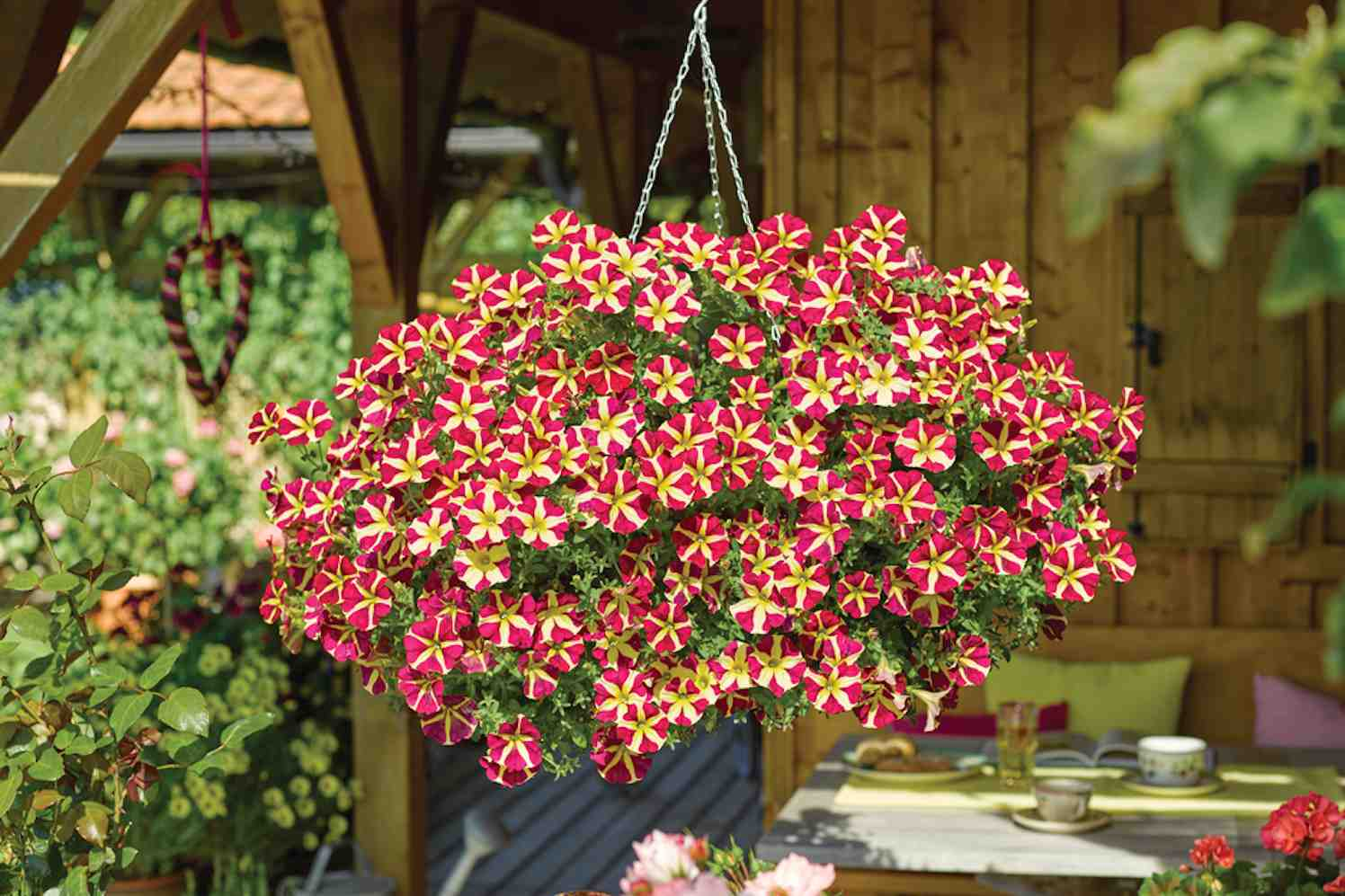 petunia's in vondelpark
