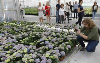 Hortensia in the picture