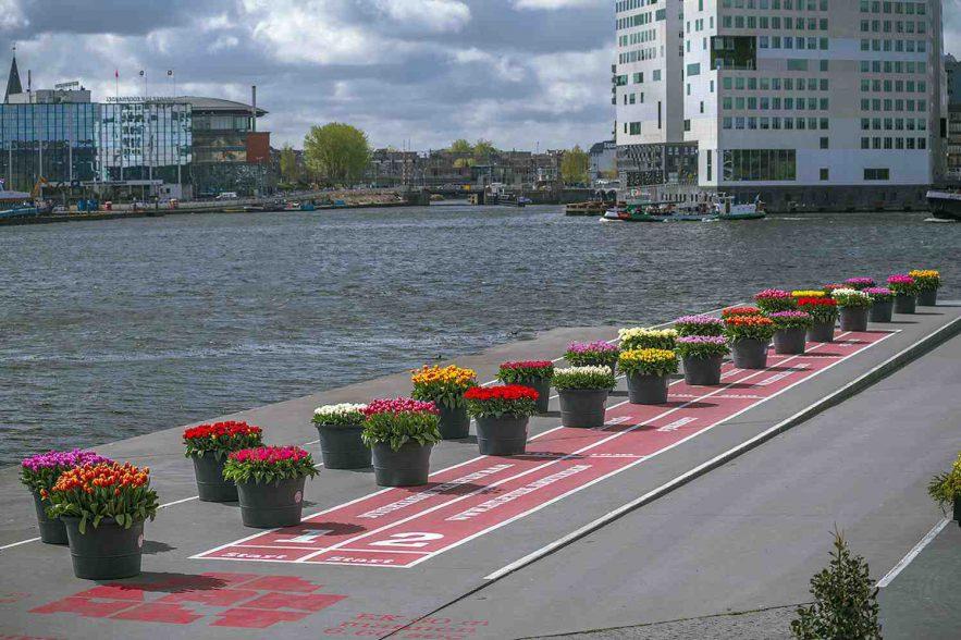 tulp-festival amsterdam
