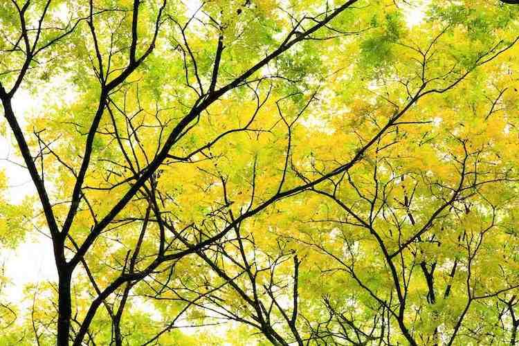 bomen met bladerdek