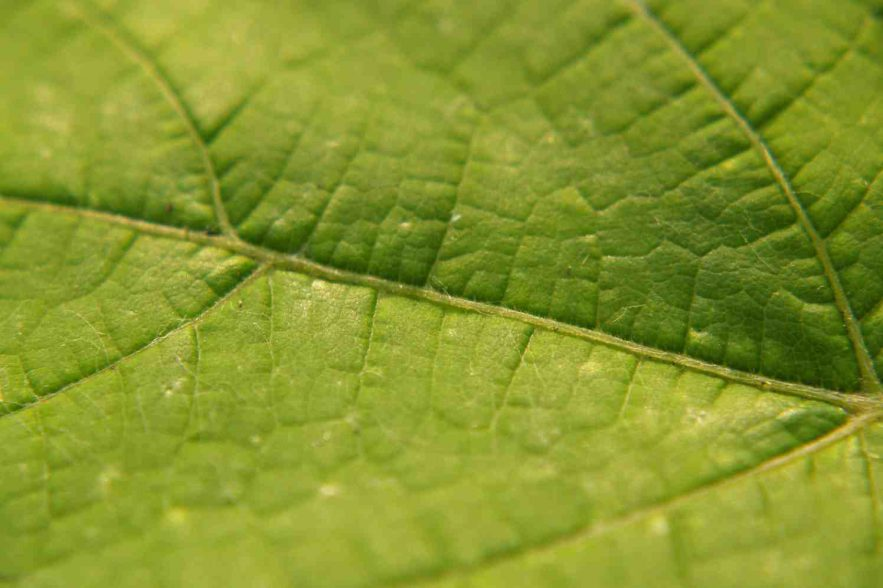 blad van een boom trees