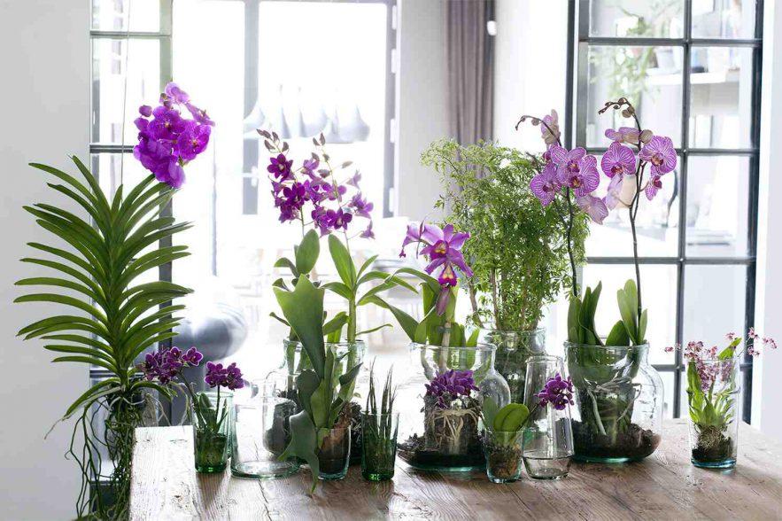 Orchideeën dé stijltrend van 2017