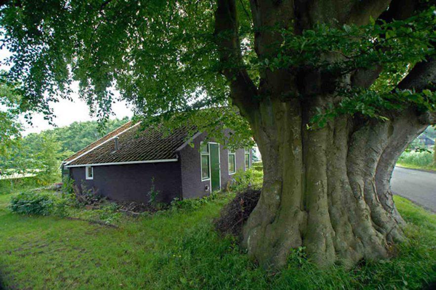 bomen van ereklasse