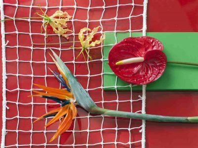 exoten Strelitzia gloriosa en anthurium