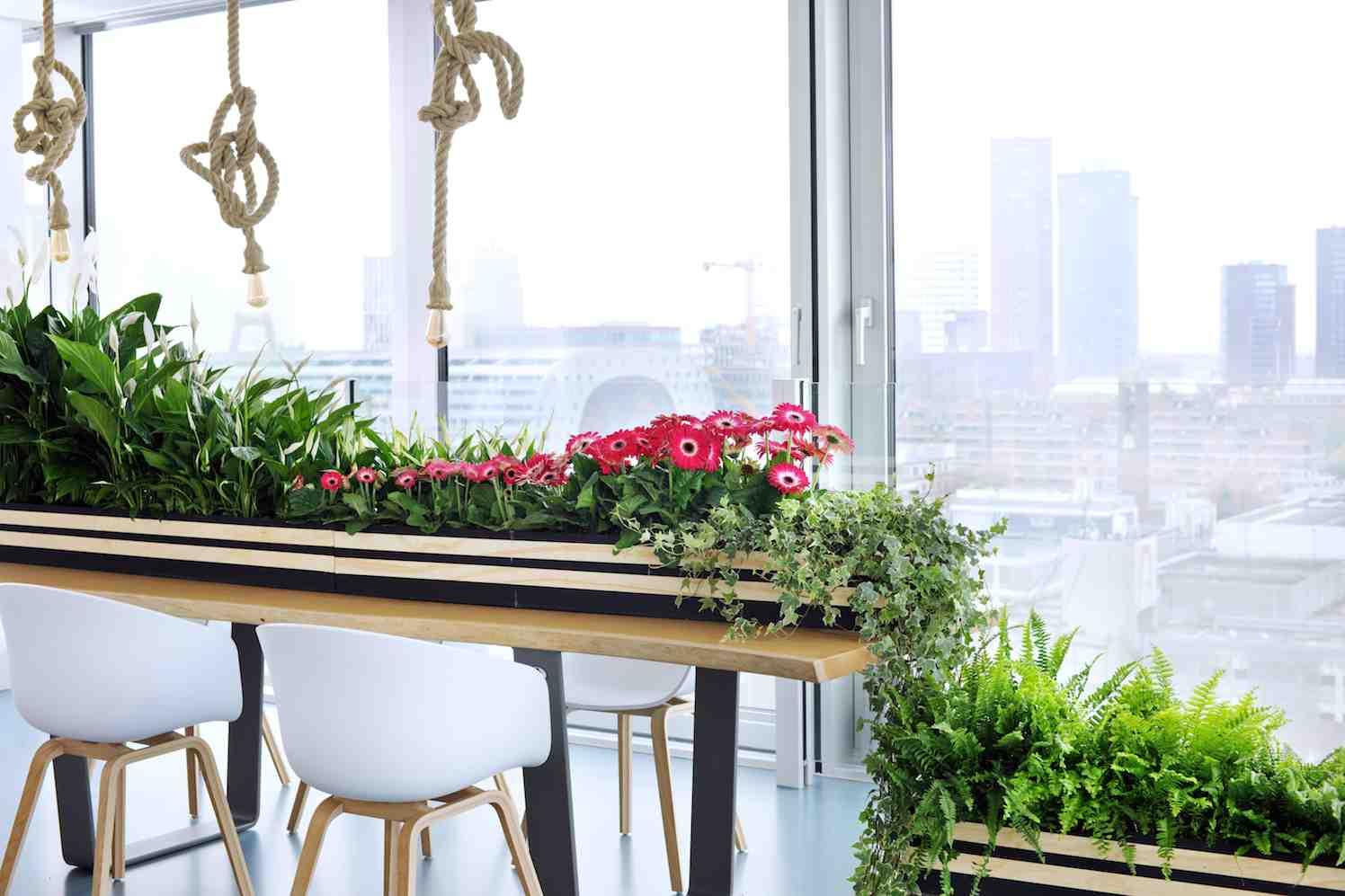 zuiver groen zuiverende woonplanten