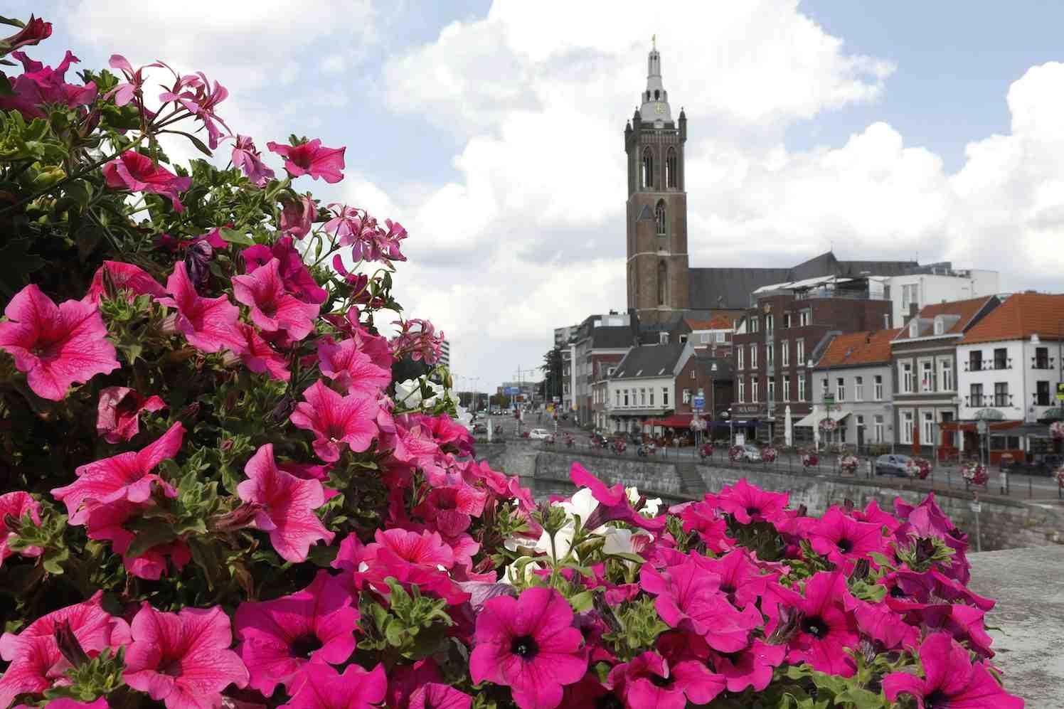 Zomerbloei zorgt voor positief imago Roermond