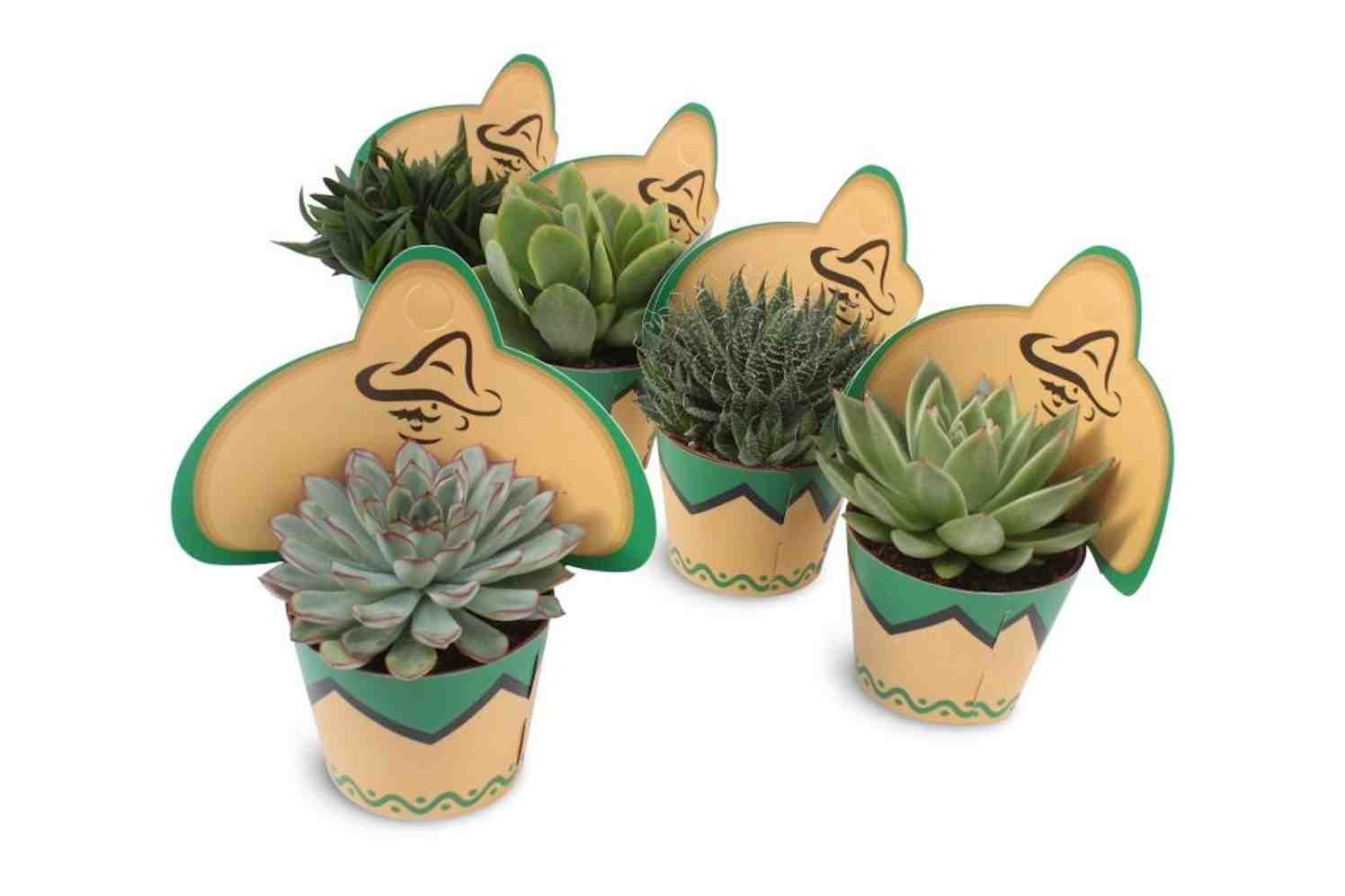 succulenten-potcover