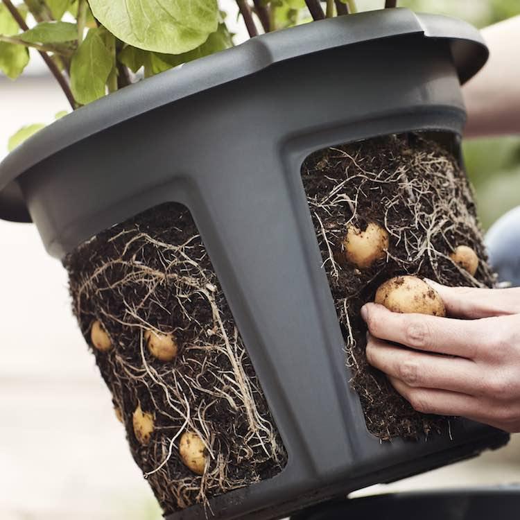 green-basics-potato-pot